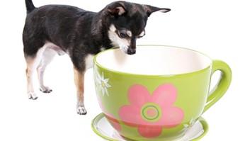 posso dare il tè al mio cane?