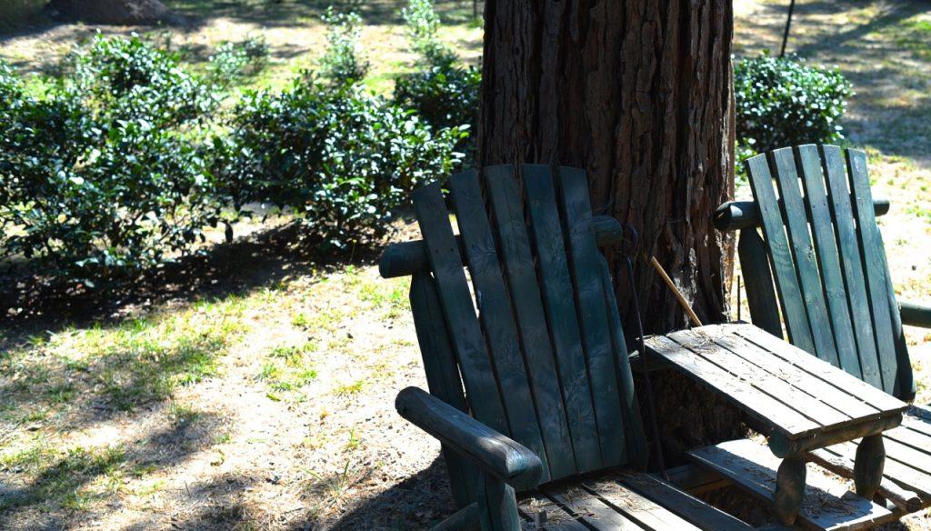 Mike Fritts è il titolare della Golden Feather Tea, piantagione di tè in California