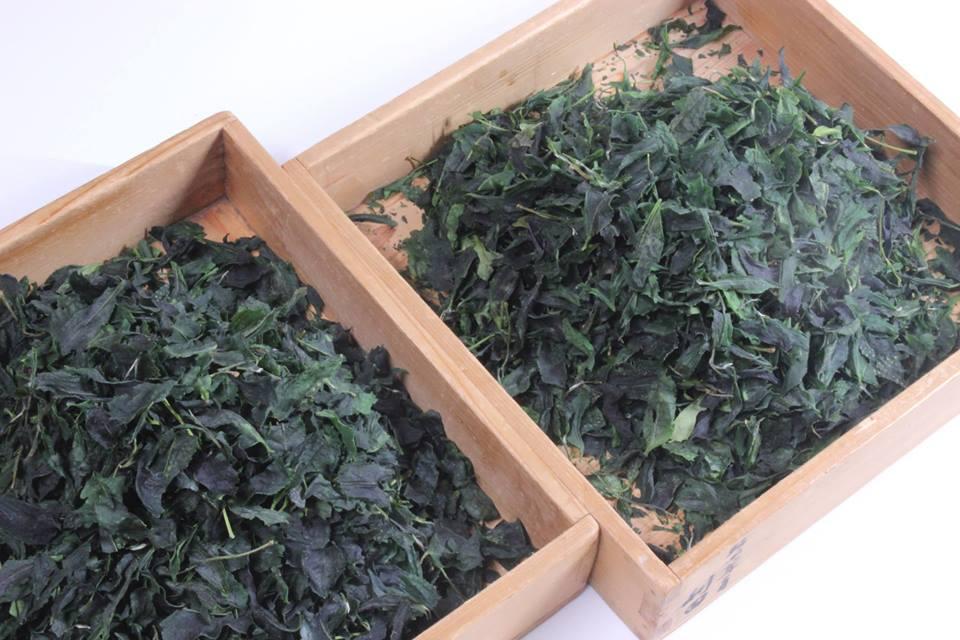 Che cos'è il Matcha? Come si prepara? La risposta nell'intervista a Rishouen Tea Co.