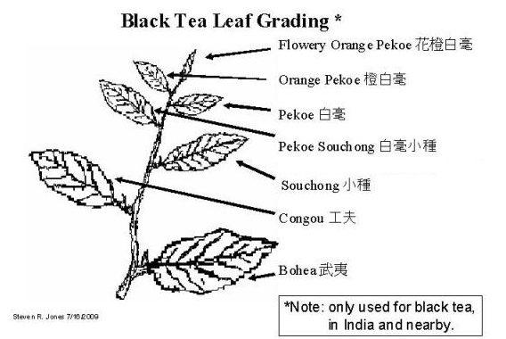 Il tè affumicato più conosciuto è il Lapsang Souchong
